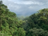 Beautiful View from Rainforest
