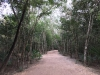Jungle road leading to temple sites