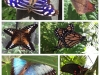 Some of the butterflies at the Farm