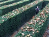 Getting amazingly lost in a maze