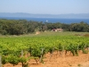 Ile de Porquerolles wine country (France)