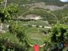 Vineyards in Vaud Switzerland