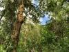 Jungle Walk