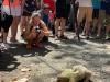 A Fallen Sloth - Posing for the Paparazzi