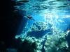 Gran Cenote (great visibility)