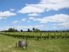 New Zealand\'s Sauvignon Blanc have gained international acclaim