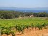 Ile de Porquerolles wine country (France)